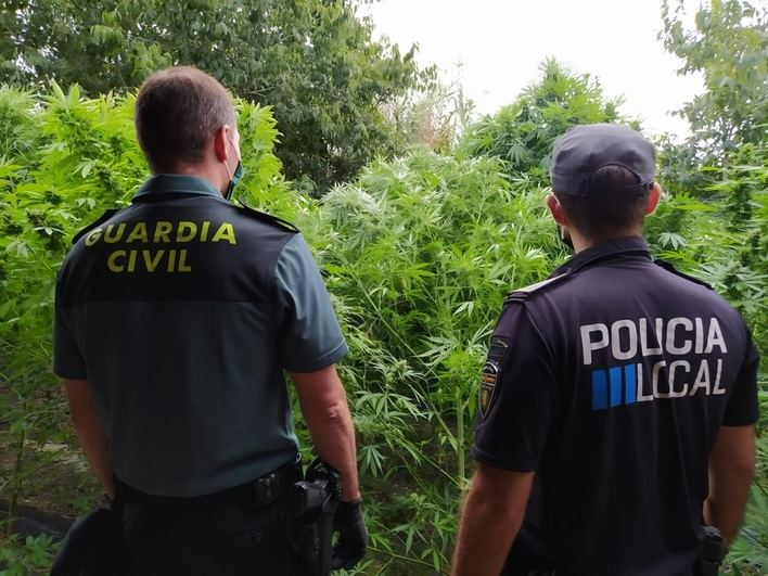 Incautadas 20 plantas de marihuana en una finca de Lloret