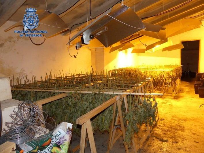 Desarticulada la mayor organización de producción de marihuana de Mallorca