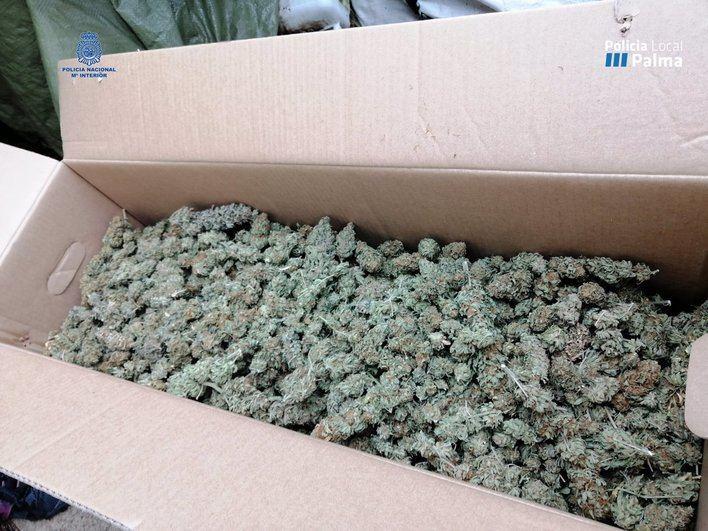 Detenida en Palma una mujer de 57 años con 25 kilos de marihuana