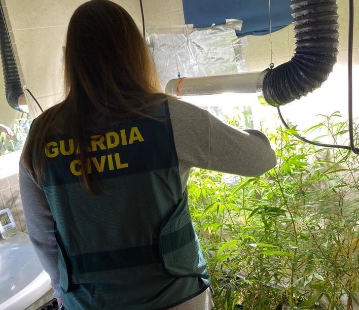 Incautan 70 plantas de marihuana en una vivienda okupada en Menorca