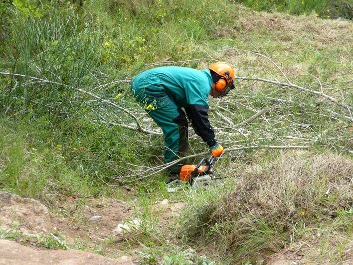 Endesa destina más de 1,1 millones a limpiar la masa forestal junto a los tendidos eléctricos de Baleares