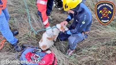 Recogen a un perro atrapado en un coche que se despeñó por el torrente de Vinagrella