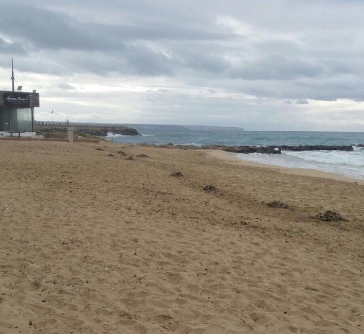 Cort instala la bandera amarilla en la Playa de Palma y la verde en Cala Mayor y Cala Estància