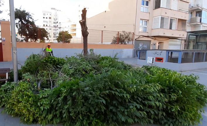 Los vecinos denunciarán a Cort por la tala de olmos en Jacint Verdaguer y Parc de ses Estacions
