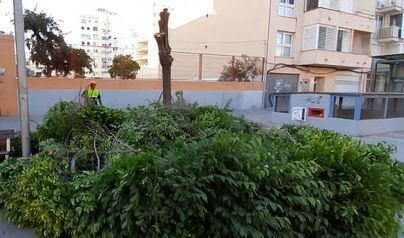 Denuncian la tala indiscriminada de árboles en diferentes barriadas de Palma