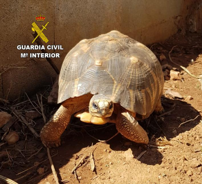 Un detenido con múltiples antecedentes por robar cuatro tortugas de Natura Parc