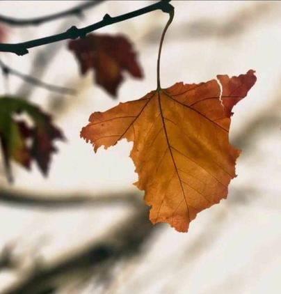 Que el otoño no nos rompa...