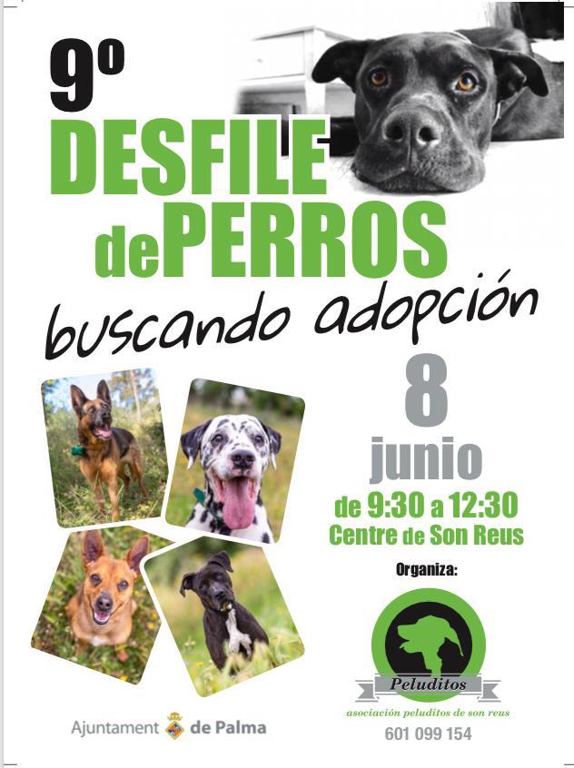 Peluditos de Son Reus organiza un nuevo desfile para buscar familia a perros abandonados