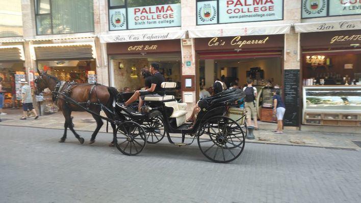 La Policía de Palma solo ha multado a siete conductores de galeras durante la ola de calor