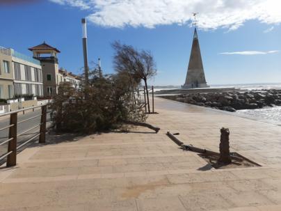 Árboles arrancados y desperdicios en el paseo del Molinar por el fuerte viento