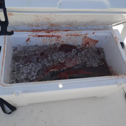 Intervenidos 32 kilos de atún rojo en una lancha de pesca recreativa en el Cap de Formentor