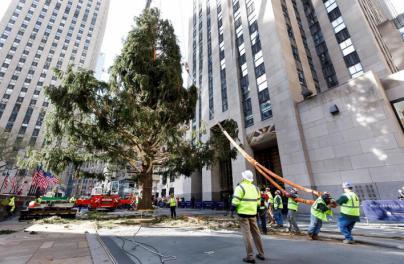 Nueva York huele a Navidad: Rockefeller Center ya tiene su tradicional abeto