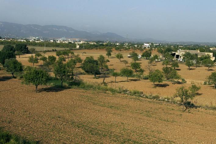 Baleares tiene 879 operadores de agricultura ecológica, entre productores y comercializadores