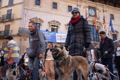 Cort retira la ordenanza de las tres mascotas por piso