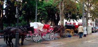 Los caballos se empapan bajo la lluvia
