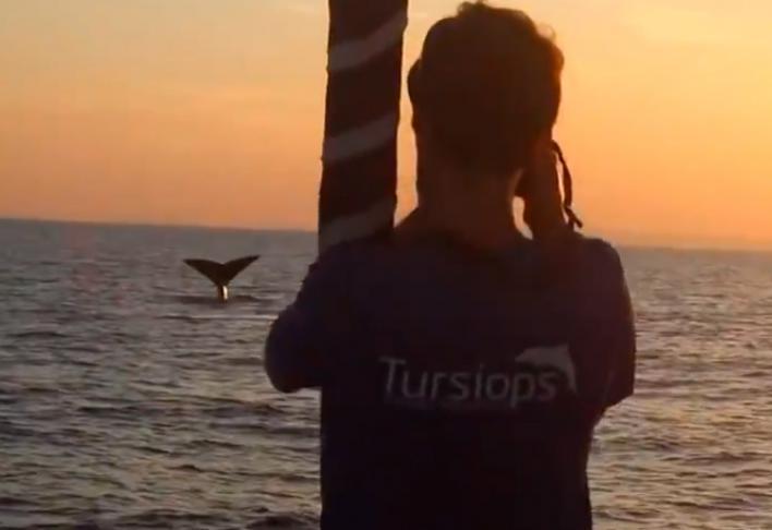 Avistan 44 cachalotes en el norte de Menorca