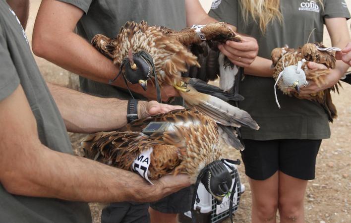 Endesa participa en las jornadas formativas sobre el impacto de los tendidos eléctricos en las aves