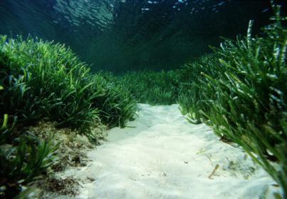 El fondo marino europeo está lleno de basura