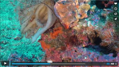 Imágenes de las zonas submarinas que formarán parte de la ampliación del parque