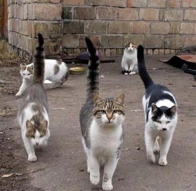 Baldea desmiente que los gatos de la Residencia La Bonanova tengan sarna