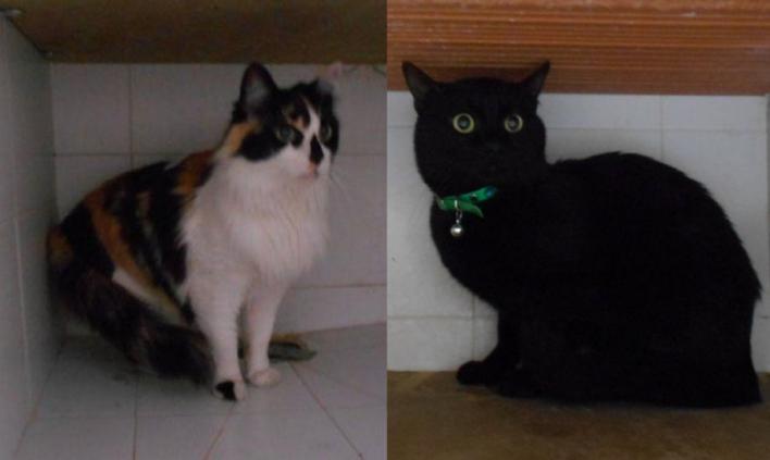Oleada de muertes de gatos en Son Reus por un brote del virus de la panleucopenia