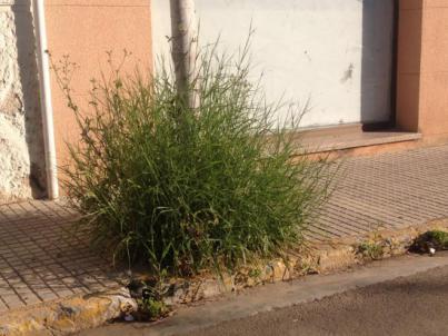 Los productos de hierbas medicinales podrían ser dañinos