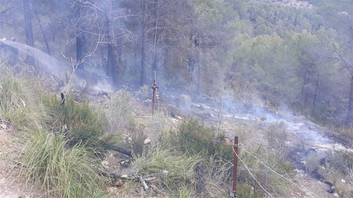 Extinguido un incendio forestal en el Coll de sa Creu