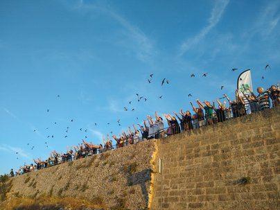Liberados casi 600 vencejos tratados en el Centro de Recuperación de la Fauna de Baleares