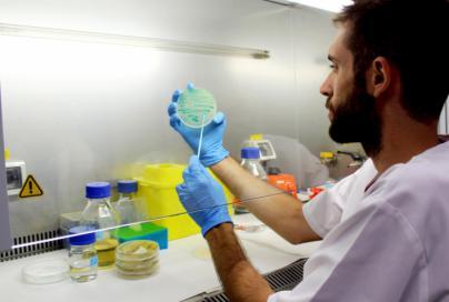 Salut confirma el segundo caso de listeria en Baleares