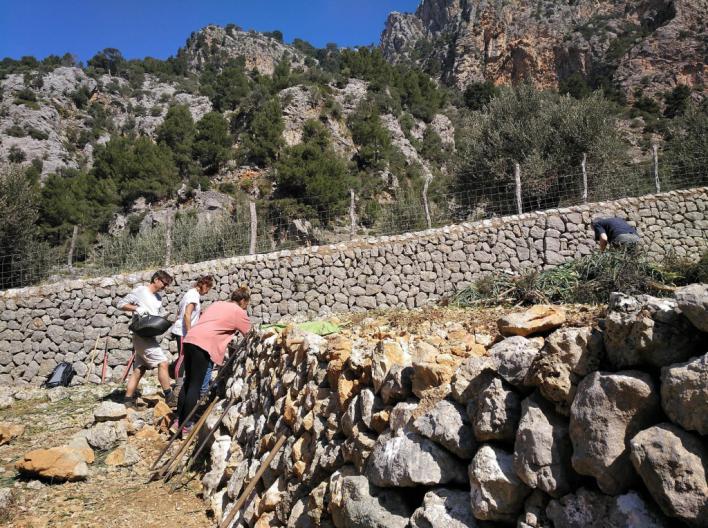 Turistas y residentes alemanes restauran 'marges' en el Barranc de Biniaraix