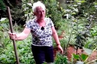 Desmanteladas 4 plantaciones de marihuana en Palma