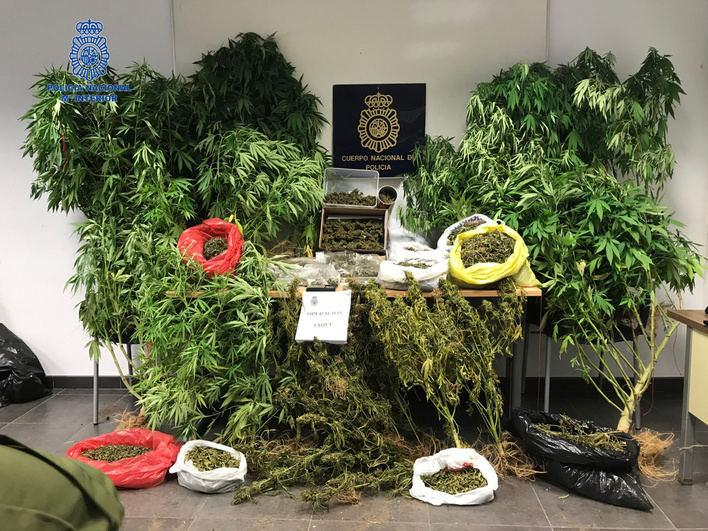 Detenida una pareja en Ciutadella por cultivo y tráfico de marihuana