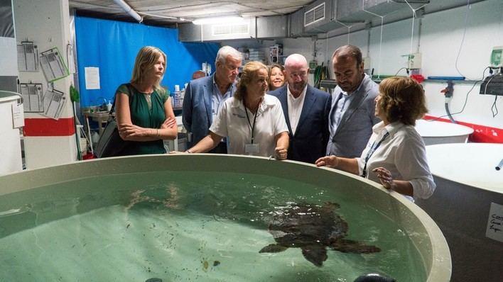 Meliá Hotels International se compromete con la conservación de la Tortuga Boba