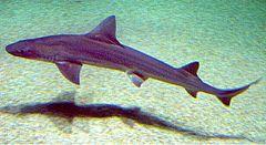 Disminuyen la especies de peces amenazados en aguas de Balears