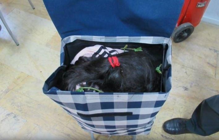 Detenido al intentar pasar a Melilla a una niña siria en carrito de la compra
