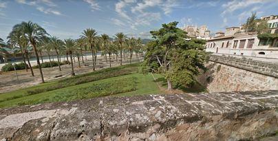 Cort evaluará el estado de los árboles tras el incidente del Parc de la Mar