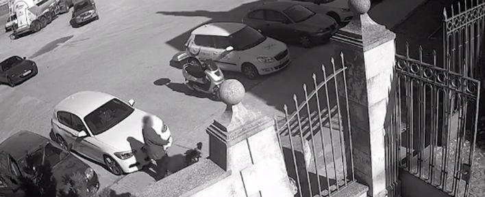 La Policía Local difunde el vídeo del abandono de una perrita en Palma
