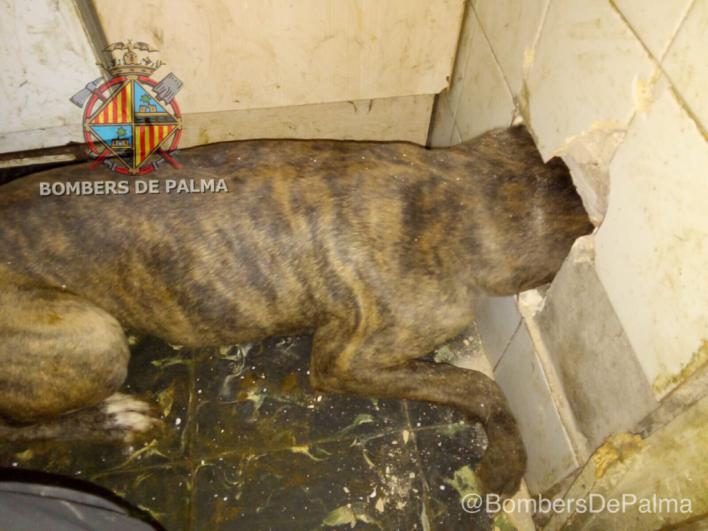 Rescate de un perro en Son Gotleu tras quedar atrapado