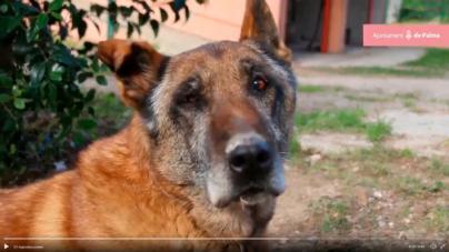 Cort difunde por redes un vídeo de los perros policía