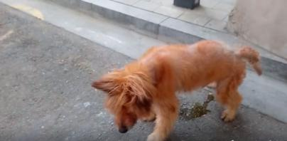 Denuncian el mal estado de un perro en plena calle de Es Fortí