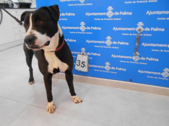¿Quién pasea a los perros de Son Reus en plena crisis del coronavirus?