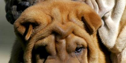 Los perros defecan en línea con el campo magnético