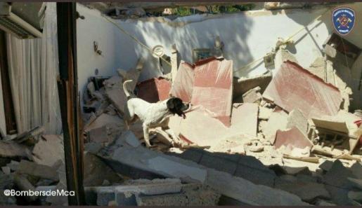 Muere Perry, el perro de los Bombers de Mallorca que colaboró en Sant Llorenç