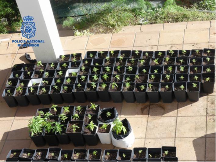 Cinco detenidos por cultivar marihuana en una casa okupada