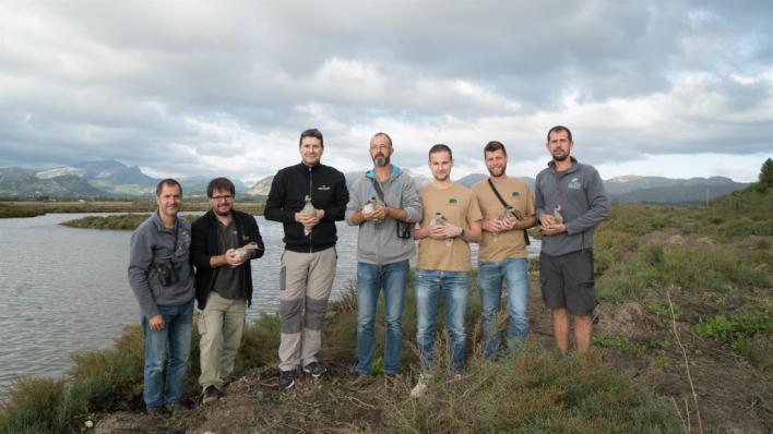 Liberan una treintena de ejemplares de 'rosseta' en S'Albufereta