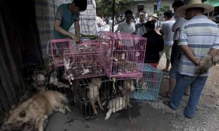 La ciudad china de Shenzen prohíbe el consumo de perros y gatos