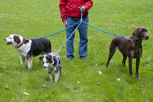 Con tres perros en Palma: viviendo al límite
