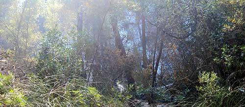 Controlado el incendio forestal de Na Burguesa