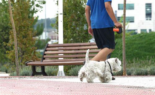 Tener una mascota no nos hace más felices ni más sanos