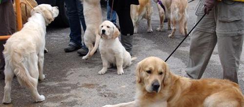 La Policia Local ha puesto más de 100 multas relacionadas con mascotas